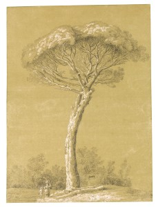 Fig. 1 Jakob Philipp Hackert, A Pine near Genzano, black chalk, heightened with white, on light brown paper, 54.2 x 40.1 cm